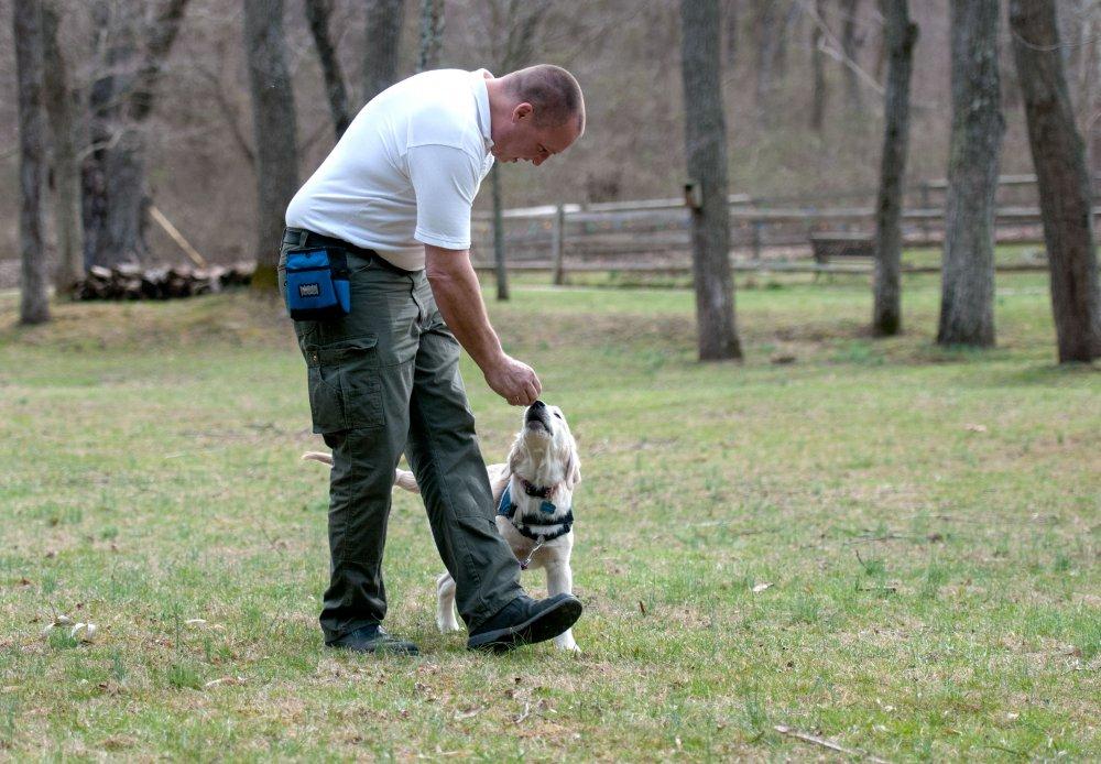 pes, se kterým běháte, musí umět základní povely